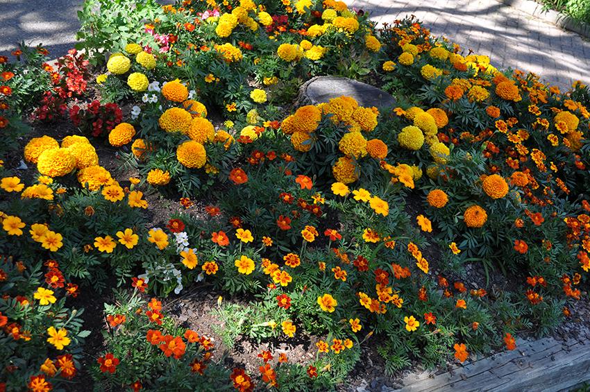 A CCOC garden